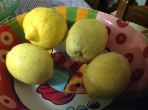 Limoni dell'albero di Sonia